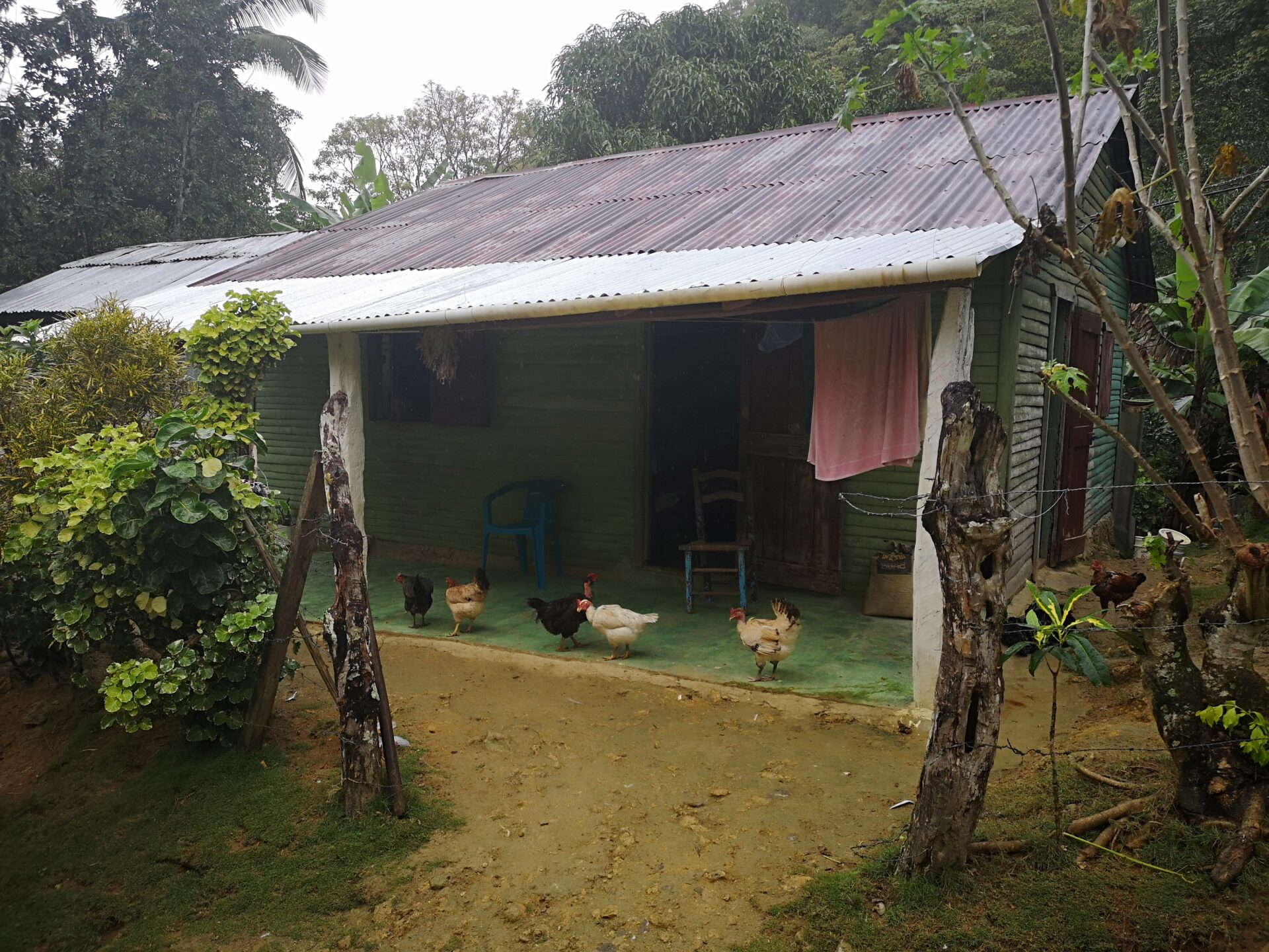 Tin roof house with chickens